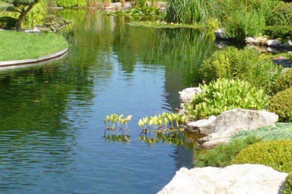 ponds 1, Хидростоп
